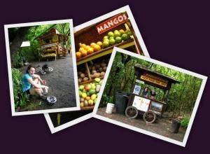 Collage Maui